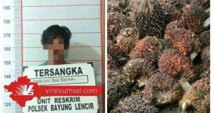 Tersangka pencurian buah kelapa sawit di PT WMS Bayung Lencir diamankan di Mapolsek Bayung Lencir. FOTO :VIRALSUMSEL.COM