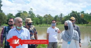 Rizski Aprilia Anggota DPR RI kunjungi areal persawahan Sungai Jejawi, Kelurahan Sei Selincah, Kecamatan Kalidoni, Palembang. FOTO :VIRALSUMSEL.COM